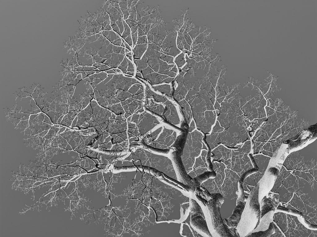 Tree inversion